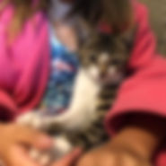 Cherish's Kitten.jpg