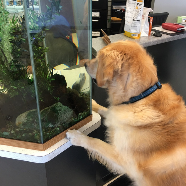 One of our patients mesmerized by our aquarium! (2018)