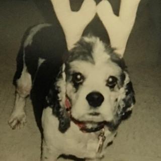 Bitsy, our precious clinic dog.