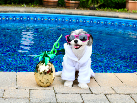Summer Safety Tips for Your Pets!
