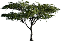 FD TREE.png