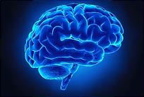 Ons brein. Daar waar impact feitelijk plaatsvindt.