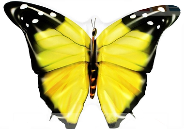 butterfky yellow 2.png
