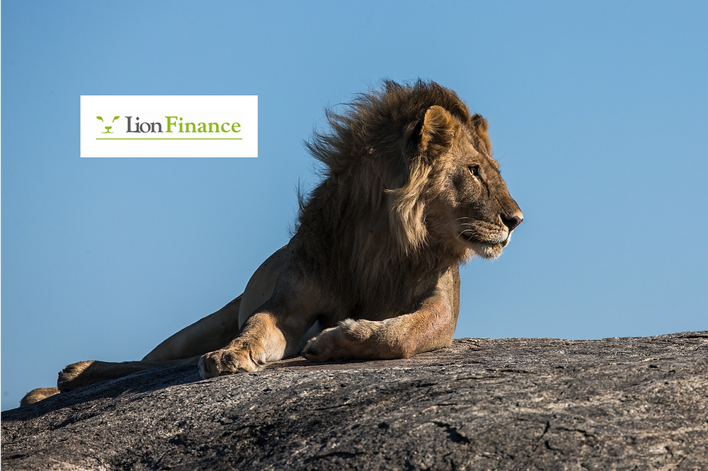 lion laying on a rock in finance