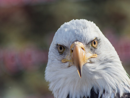 Assessing your candidate(s) to increase chances of succes? Watch with an eagle's eye.