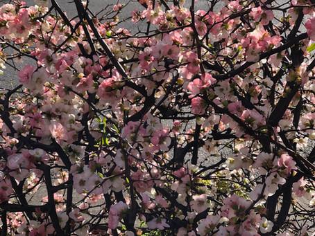 春の不調対策