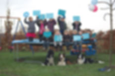 dogfrisbee certificaart