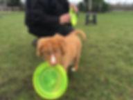 dogfrisbee Lessen