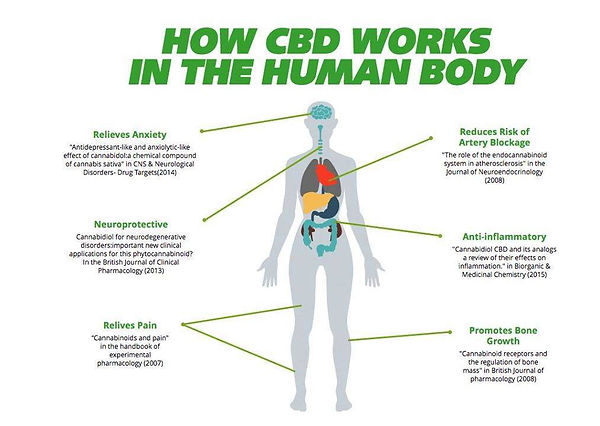 cbd in the body.jpg