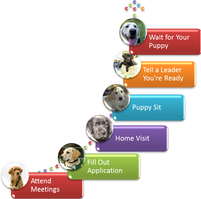 A colorful graphic of the steps needed to become a puppy raiser