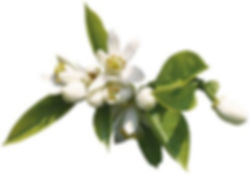 laboiteaodeurs_fleur_oranger