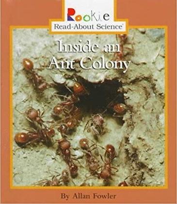 Inside an Ant Colony