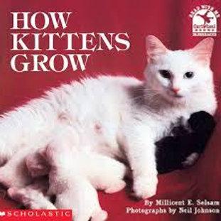 How Kittens Grow