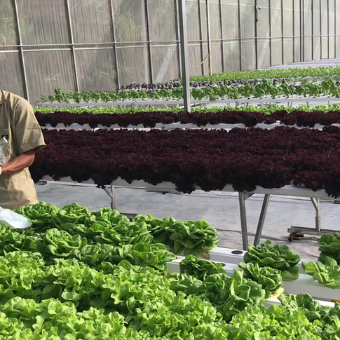 Agro-Hydroponic Primera Cosecha