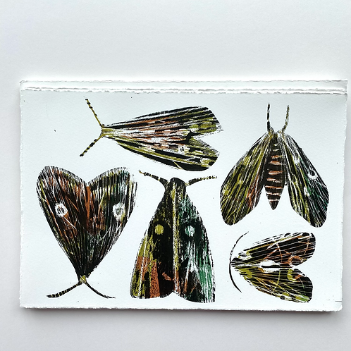 'May Day Moths' - Silkscreen Print