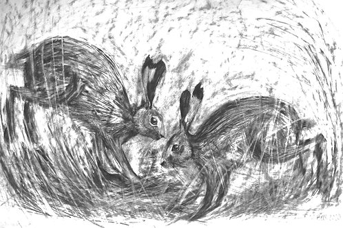 Pencil Drawing - Dancing Hares