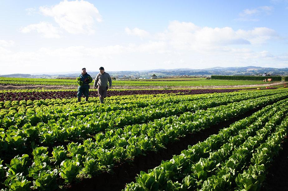 The Fresh Grower fields.