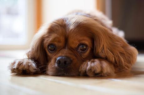Nicole Cowley's dog, Joey