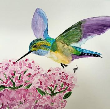 Hummingbird and pink flowers