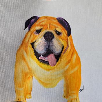 Bulldog original watercolor painting