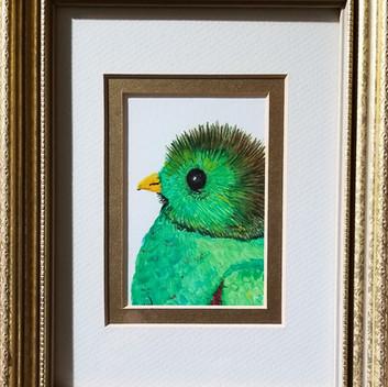 Baby Quetzal original watercolor painting