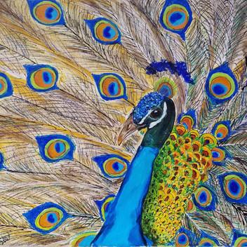 Peacock original acrylic painting