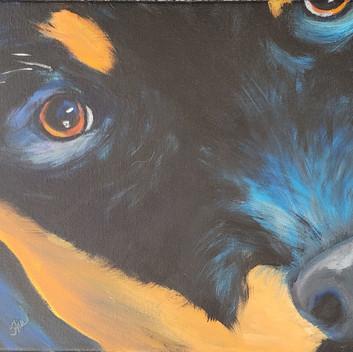 Black and orange dog's face