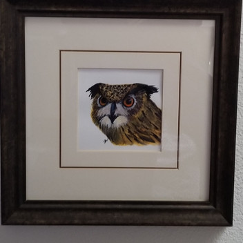 Angry owl original watercolor painting