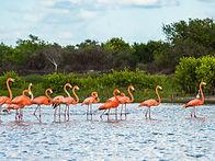 Flamingoes at Celestun Biosphere Reserve