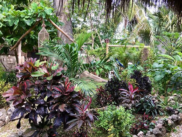 garden2,jpg.JPG