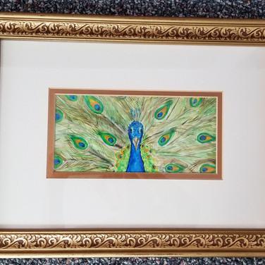 Framed watercolor peacock