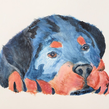 Rottweiller puppy, original watercolor painting