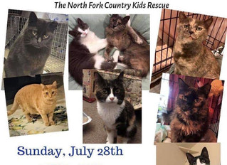 July 28, 2019 Cat Adoption Event