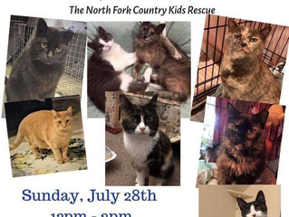 July 28, 2019 Cat Adoption Event
