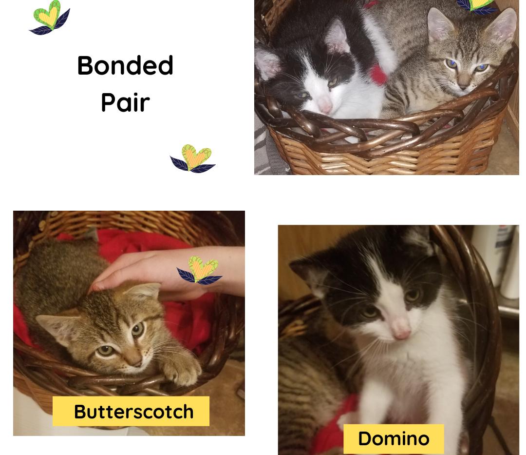 Bonded Pair domino.png