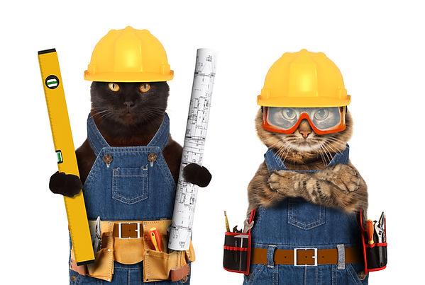construction cats.jpg