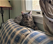Loren couch.jpg