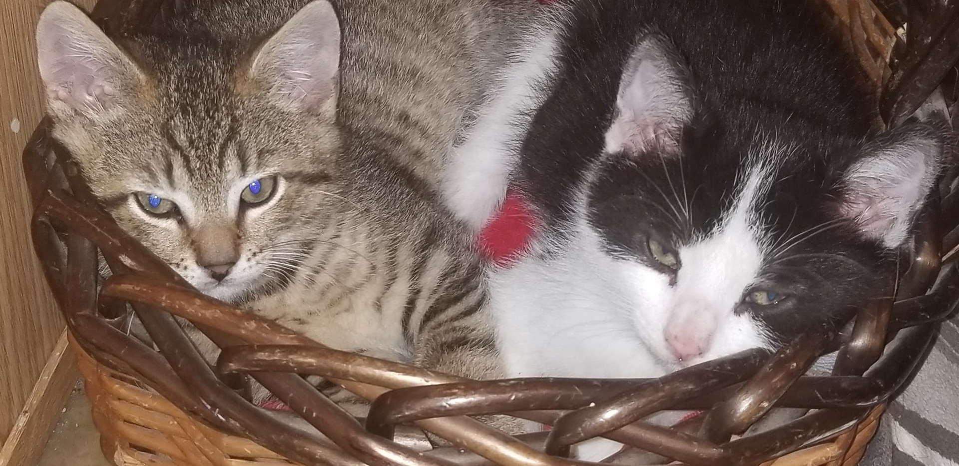 Domino and Butterscotch.jpg