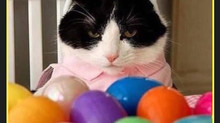 Meet the Easter Bunny!