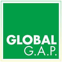 Somos Global GAP.jpg
