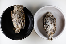 Eastern Screech Owls (Black & White)