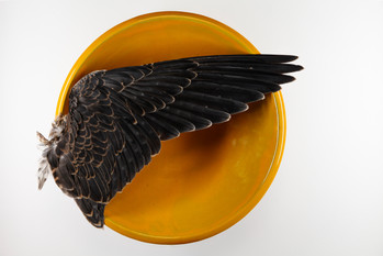 As Above (Yellow)