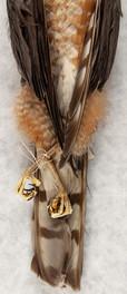 Sharp-Shinned Hawk (Detail)