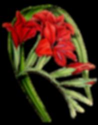 flor-vermelha_edited_edited.png