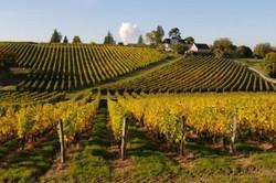Les vignes et le vin de Vouvray ou M