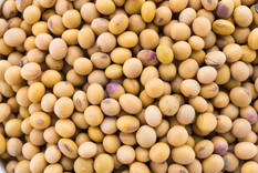 soybean-isolated-on-white-background.jpg