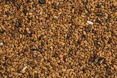 alfalfa-seeds-germination-background.jpg