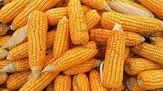 corn-1726017_640.jpg