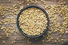 wheat-grains-bowl-wheat-popcorn-bowl-whe