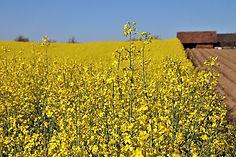 yellow-5084544_640.jpg
